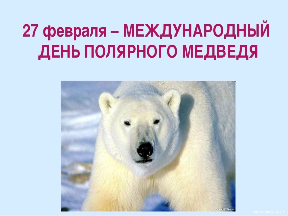 27_02_medved.jpg